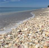 Shelling day. - Vacant Land for sale at 6360 Manasota Key Rd #b, Englewood, FL 34223 - MLS Number is D6103470