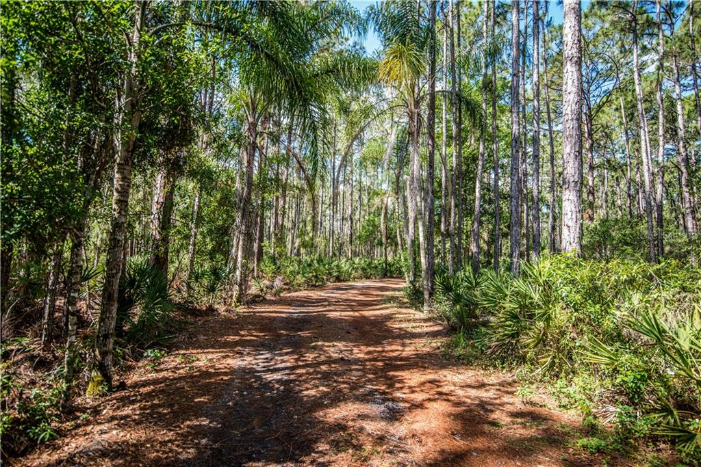 As you turn into your drive, you'll be graced with foliage and palms on both sides.  And wait until you see what's at the end of the drive... - Single Family Home for sale at 3184 Ulman Ave, North Port, FL 34286 - MLS Number is C7400587
