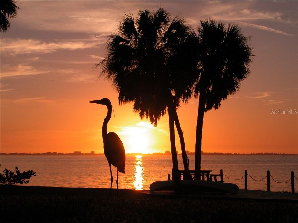 There are no more spectacular sunsets than along Florida's gulfcoast, facing due West! Sarasota features it every day! - Single Family Home for sale at 1807 Oleander St, Sarasota, FL 34239 - MLS Number is A4475067