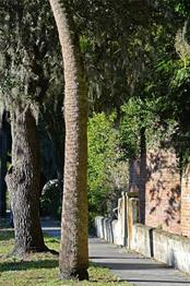 Curved privacy wall, tree-lined community & sidewalks in a park-like setting. - Single Family Home for sale at 2229 Mcclellan Pkwy, Sarasota, FL 34239 - MLS Number is A4463211