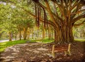 Beautiful Banyan Trees. - Single Family Home for sale at 7 Cornwell On The Gulf, Venice, FL 34285 - MLS Number is N6102542